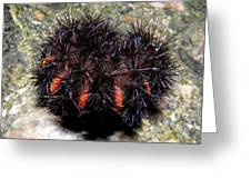 Caterpillar In All It's Beauty Greeting Card