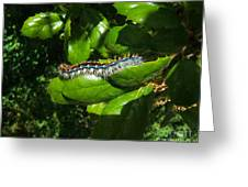 Caterpillar Photograph Greeting Card