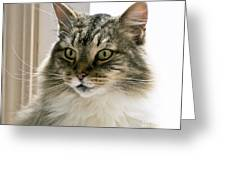 Cats Are Magical Greeting Card