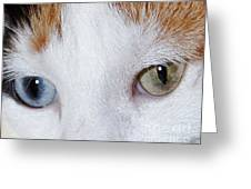 Cats Eyes Multi Colored Greeting Card