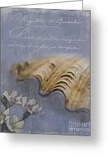 Catspaw Seashell Greeting Card