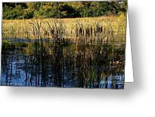 Cattail Duck Cover Greeting Card