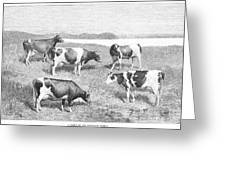 Cattle, 1888 Greeting Card