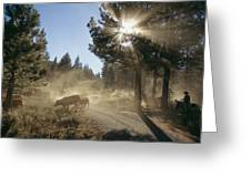 Cattle Cross A Gravel Road On A Fall Greeting Card