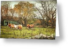 Cattle Gazing On Remaining Green Grass Greeting Card