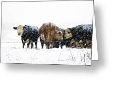 Cattle In A Snowstorm In Southwest Michigan Greeting Card