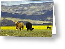 Cattle In California Greeting Card