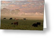 Cattle In The Fog Greeting Card
