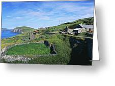 Cattle On The Road, Slea Head, Dingle Greeting Card