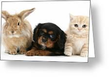 Cavalier King Charles Spaniel Pup Greeting Card