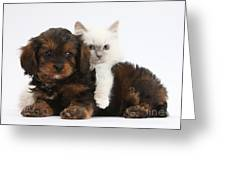 Cavapoo Pup And Blue-point Kitten Greeting Card
