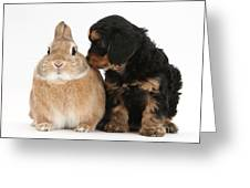 Cavapoo Pup And Sandy Netherland-cross Greeting Card