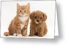 Cavapoo Puppy And Kitten Greeting Card