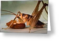 Cave Cricket Feeding On Almond Greeting Card