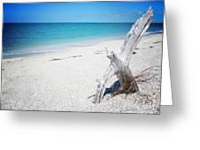 Cayo Costa Serenity Vanilla Pop Greeting Card