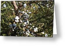 Cedar Blue Greeting Card
