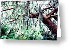 Cedar Draped In Spanish Moss Greeting Card