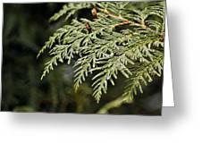 Cedar Due Droplets Greeting Card