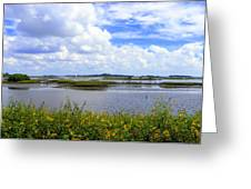 Cedar Key Sunflowers Greeting Card