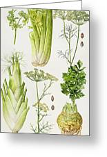 Celery - Fennel - Dill And Celeriac  Greeting Card by Elizabeth Rice