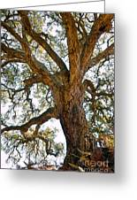 Centenarian Cork Tree Greeting Card
