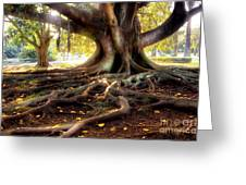 Centenarian Tree Greeting Card
