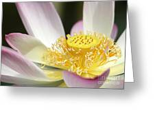 Center Of A Lotus Greeting Card