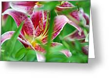 Central Park Lily Greeting Card