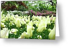 Central Park Tulips Greeting Card