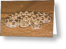 Cerastes Cerastes Horned Viper Greeting Card