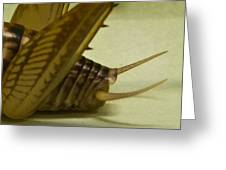 Cerci Of Cave Cricket Greeting Card