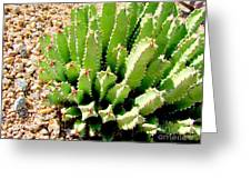 Cereus Peruvianis Cactus Greeting Card