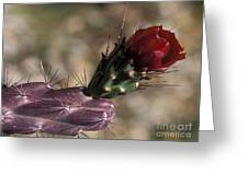 Chain Cholla Cactus Bloom Greeting Card