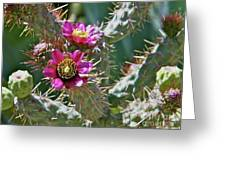 Chainfruit Cholla Greeting Card