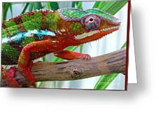 Chameleon Close Up Greeting Card