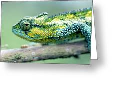 Chameleon In The Forests Of Mt Meru Greeting Card