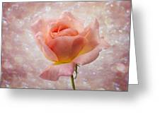 Champagne Rose. Greeting Card