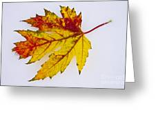 Changing Autumn Leaf In The Snow Greeting Card