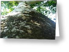 Changing Bark Of The Sycamore Greeting Card