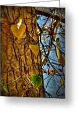Changing Leaves And A Cottonwood Trunk Greeting Card