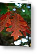 Changing Oak Greeting Card