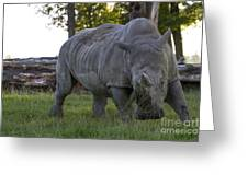 Charging Rhino. Greeting Card