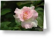 Charles Aznavour Rose Greeting Card