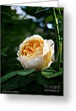 Charles Darwin Rose Greeting Card
