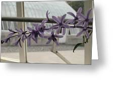 Charming Orchid  Greeting Card