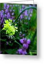 Chartreuse Greeting Card by Maria Scarfone