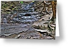 Chasing The Eternal Flame At Chestnut Ridge Park Greeting Card