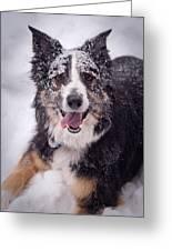 Chasing The Snow Greeting Card by Joye Ardyn Durham