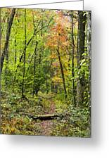 Chatooga Forest Trail Greeting Card