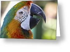 Chatty Macaw Greeting Card